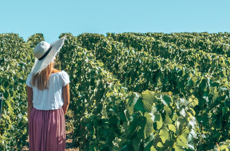 Vignoble de Champagne - Damery