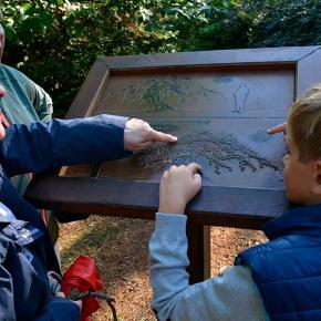 Faux de Verzy - Sentier Tourisme & Handicap