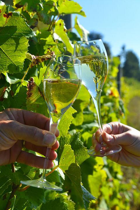 Flûtes de Champagne - Vignoble Hautvillers