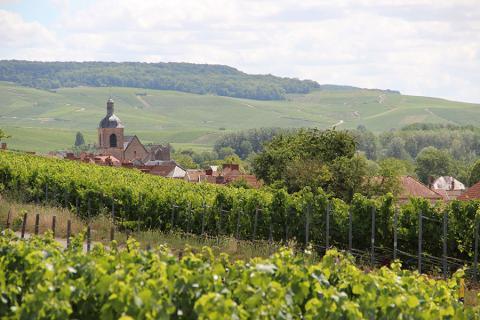 Loge de Vignes - Cumières