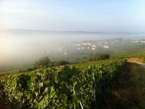 Champagne Piot Sévilliono - Vincelles