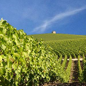 Cabane de vigne - Chouilly