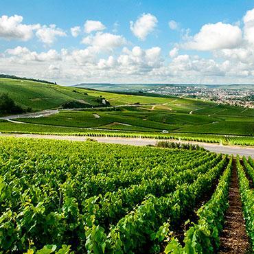 Vignoble autour d'Epernay