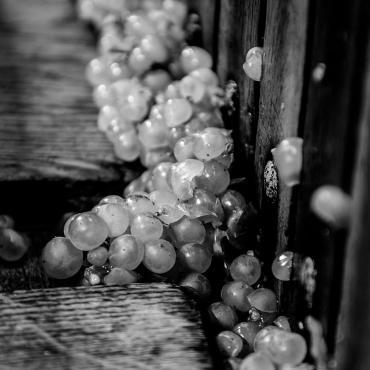 Pressoir - vendanges en Champagne