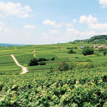 Vignoble de Champagne - CCB
