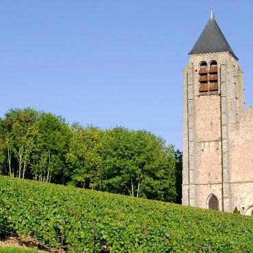 Vignoble de Champagne - Bethon