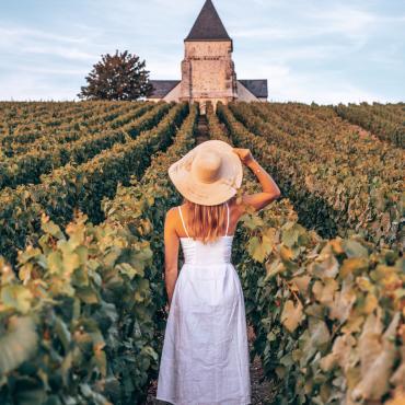 Vignoble de champagne - Chavot Courcourt